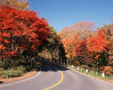 【2021年版】関東紅葉ドライブデートならここ!関東在住の筆者がおすすめの15スポット【ロケーション◎・公園・絶景スポットなど】