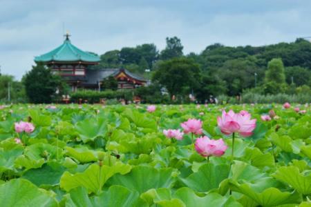 【2021年版】上野で洋食ならここ!美術館とオムライス大好きなライターおすすめの15選【老舗・お一人様OK・鑑賞後の腹ごしらえに】