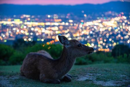 【2021年版】奈良の誕生日ディナー15選!完全個室あり・綺麗な景色・ホテル内などお祝い向きのお店を関西に居住経験ありのライターが厳選