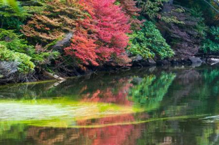 【2021年版】小海デートならここ!長野在住者おすすめの15スポット【大自然の絶景・体験型・高原グルメや満天星の宿など】