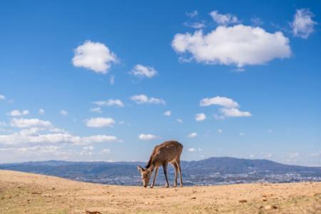 【2021年版】奈良のランチならここ!カップルのデートや記念日にもおすすめ【関西在住グルメライターが徹底ガイド】
