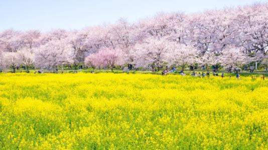 【2021年版】春の関東ドライブデートならここ!ドライブ好き筆者おすすめの15スポット【桜の絶景スポットから夜景まで】