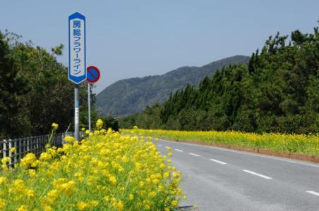 【2021年版】館山ドライブデートならここ!千葉県在住の筆者おすすめの15スポット【インスタ映え◎海鮮丼・景色のいい穴場スポットなど】