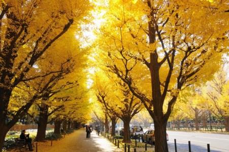 【2021年版】外苑前デートならここ!東京大好きな筆者おすすめの15スポット【定番から穴場・雨の日OKな屋内スポットまで】