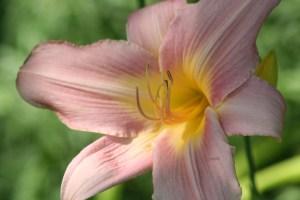 Flowers July 2008 035
