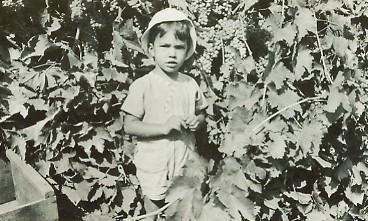 Laemmlen, Art young boy in vineyard