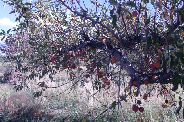 2014-10-27 Farley Orchard Murdered (15)