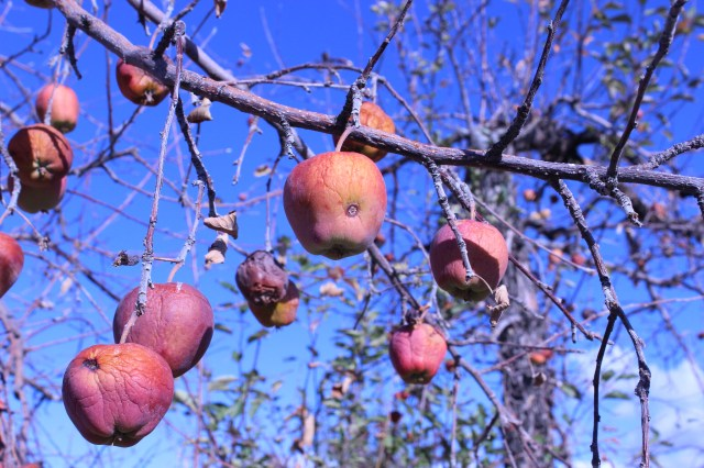 2014-10-27 Farley Orchard Murdered (17)