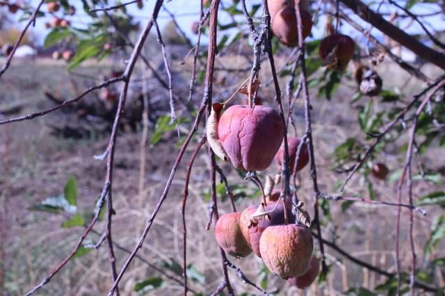 2014-10-27 Farley Orchard Murdered (21)