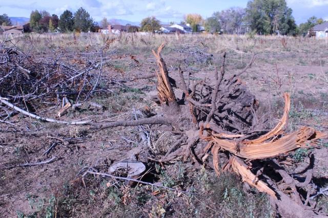 2014-10-27 Farley Orchard Murdered (5)