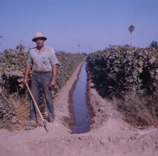 Laemmlen, Art irrigating