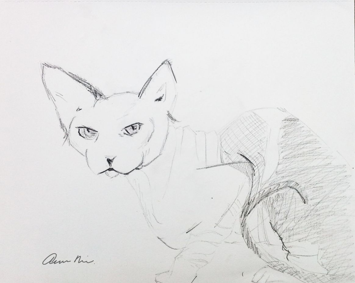 Kitty Sketch, 2014
