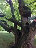 Ann Dijkstra, Old tree or climb tree, 2016