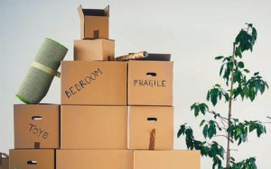 Photograph for Downsizing Shouldn't Be A Downer by Ann P. Cochran.
