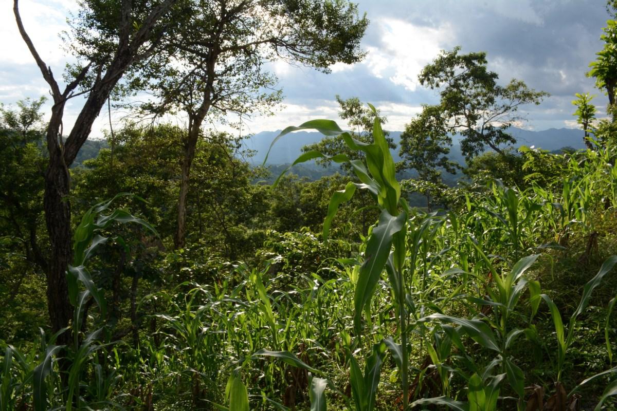 buy Waldbau auf Ökologischer Grundlage: Ein Lehr