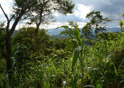 Enhancing ecosystem services for greater economic and social benefits in Latin America