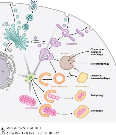 cellbio270107-f1
