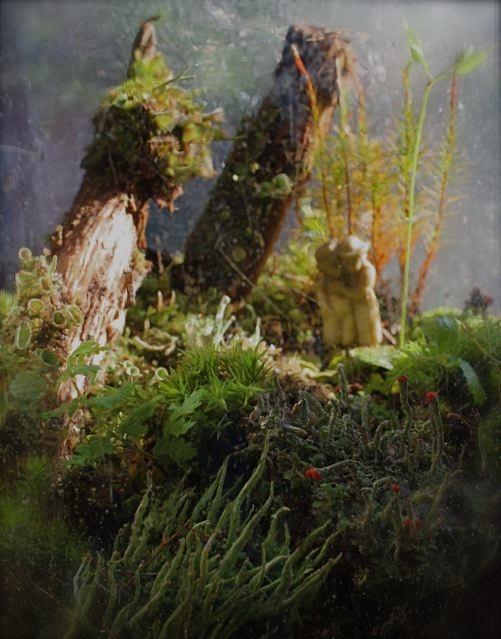 wanderers in a strange garden