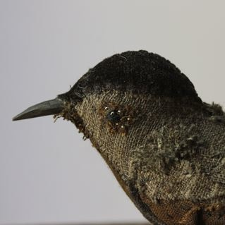brown songbird