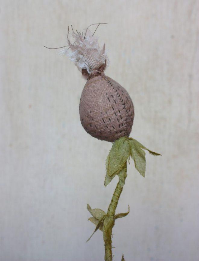 lavender_seedpod_2