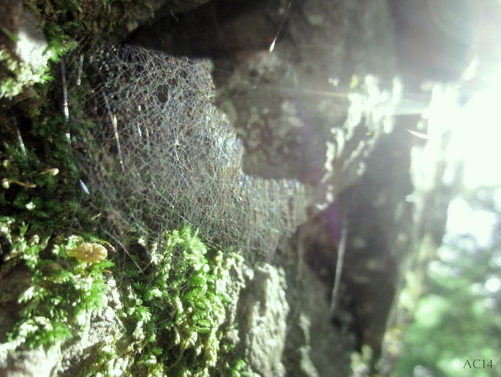 Spinnennetzgrün