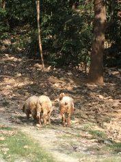 Sheep at 'The Farm'