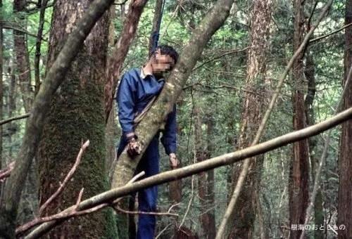Aokigahara-forêt-de-suicides-013