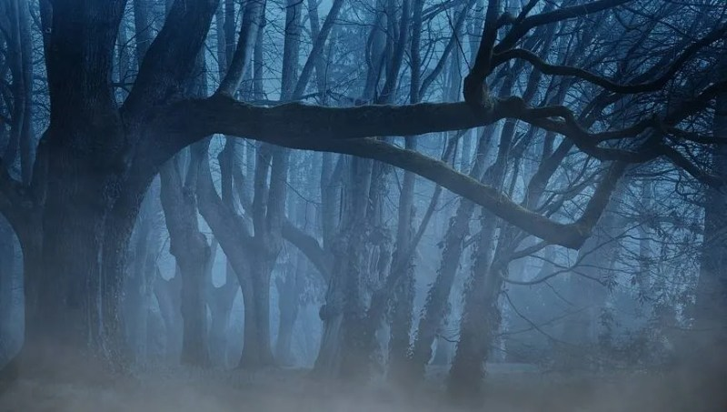 Forêt sombre mystique