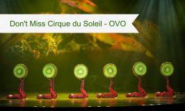 Cirque du Soleil #Ovo at North Charleston Coliseum a Must See!