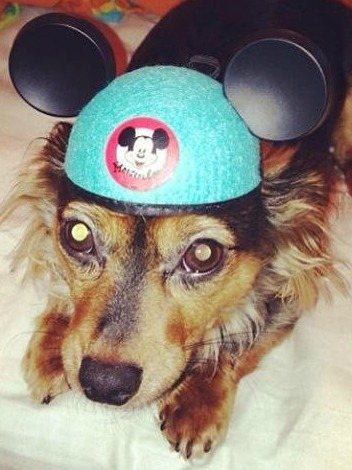 Dogs Walt Disney World