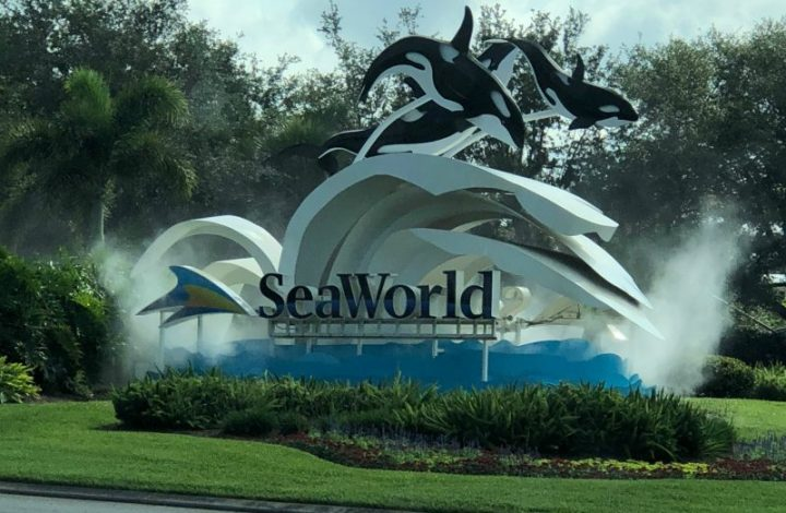 The Ups and Downs of a Visit to SeaWorld Orlando