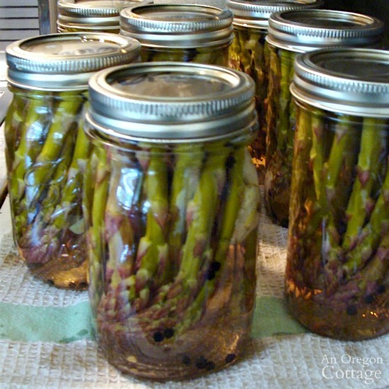 Pickling and Canning Asparagus_14-canned jars cooling