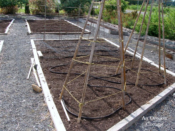 Planting a garden bed-No-Till Vegetable Bed planted and almost weed-free for the whole season!