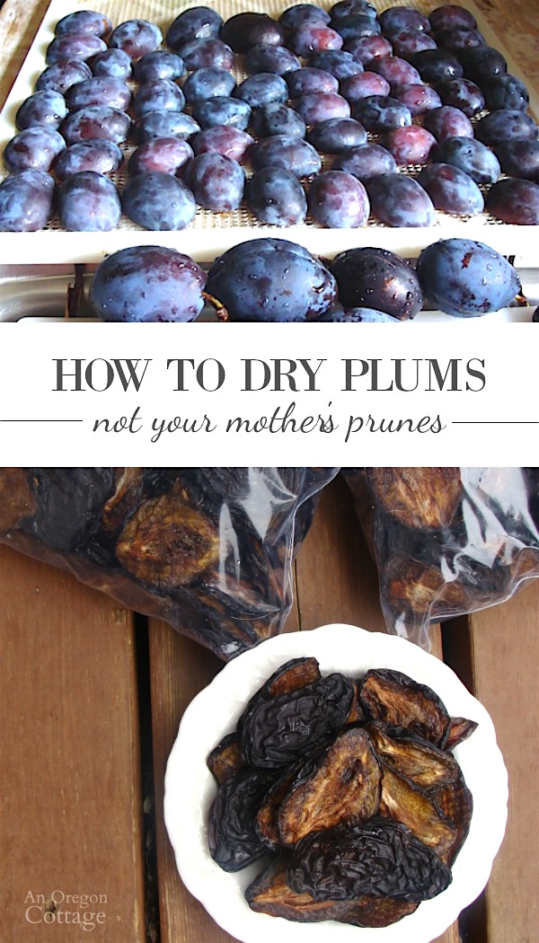 "Easy steps to dry plums for the most delicious ""prunes"" you've ever had. These are definitely NOT your mother's prunes- our family can't get enough of these!"
