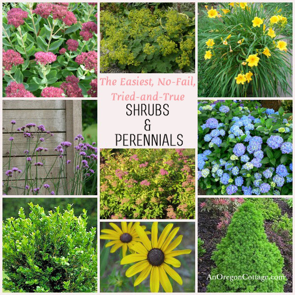 easy care shrubs & perennials