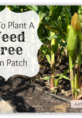 How To Plant Corn – Weed-Free!