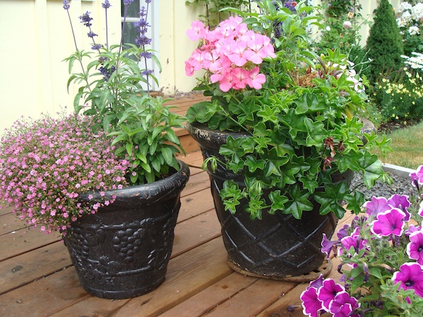 Watering Tip-Large Flower Pots