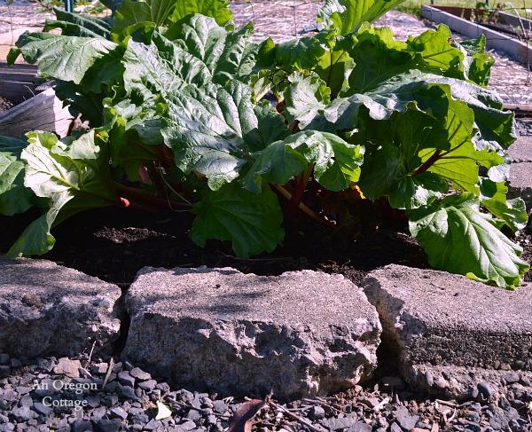 May Rhubarb - An Oregon Cottage