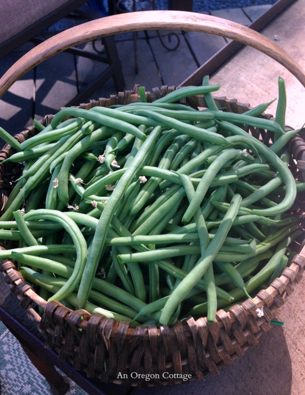Basket of Green Beans - An Oregon Cottage