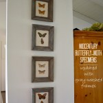 Midcentury Butterfly-Moth Specimens Updated with Gray-Washed Frames