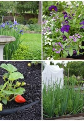 Tuesday Garden Party 5.26.15