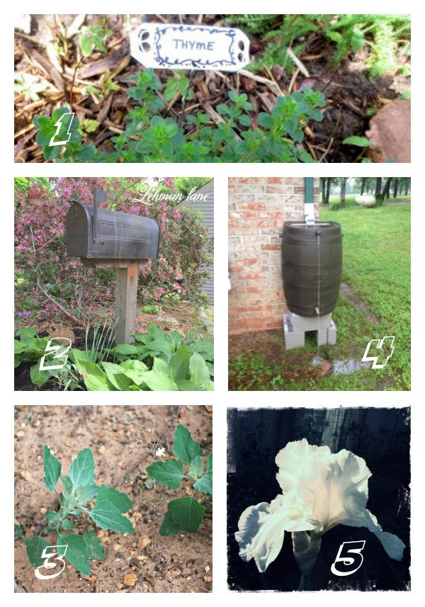 Tuesday Garden Party Features 5.19.15
