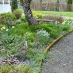 A Cottage Garden in March {Tuesdays In The Garden}
