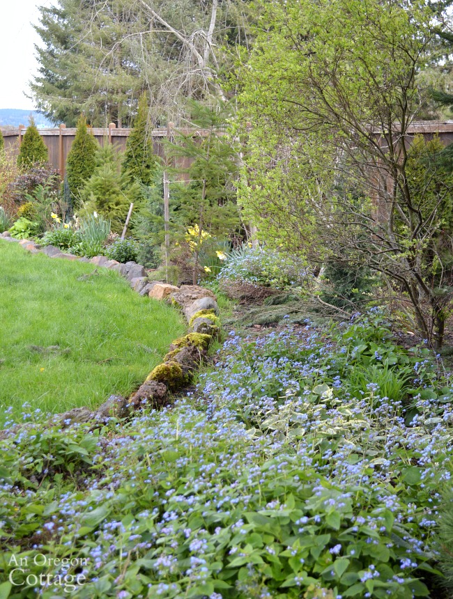 March cottage garden-long shrub and flower border