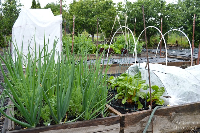 Easy Garden Tips-How to grow vegetables with less work