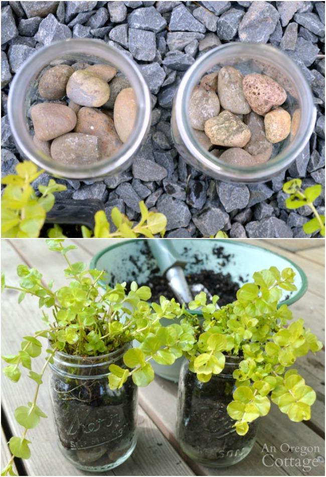 Planting mason jars for DIY reclaimed wood box gift
