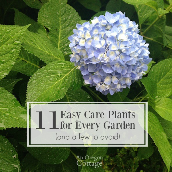 Easy Care Plants for Every Garden and a few to avoid