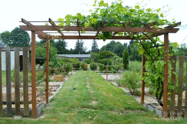 Garden Tour-Berry patch and grape arbor