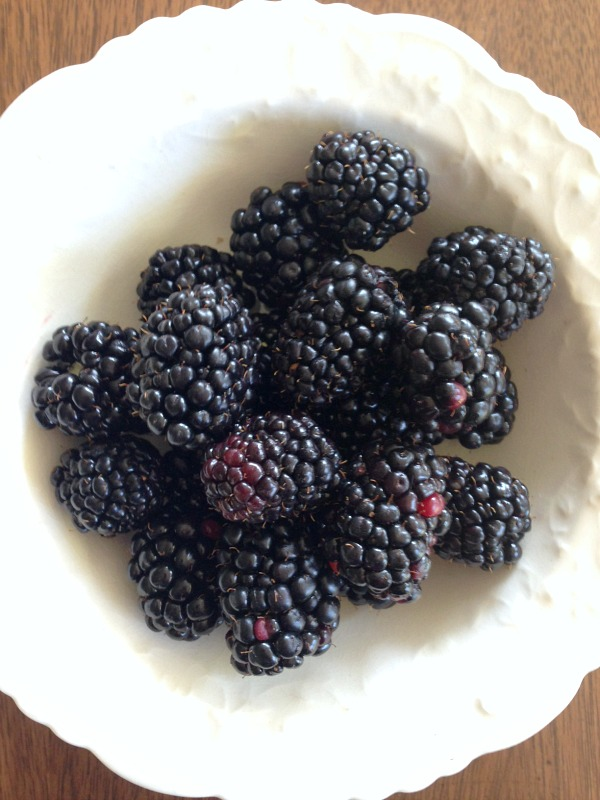 9-9 Triple Crown Blackberries that just keep producing!