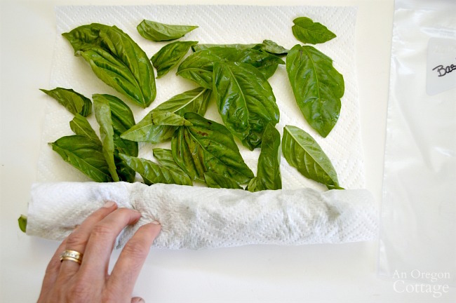 Freezing Basil Leaves-roll in a paper towel